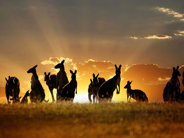 Страна, где все наоборот: Австралия