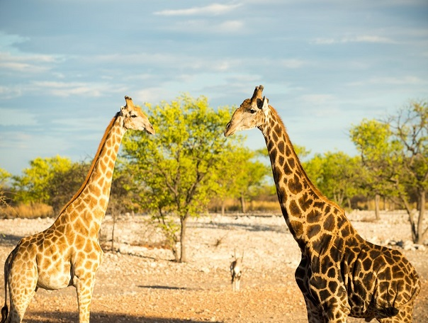 Дикий запад Африки: Намибия